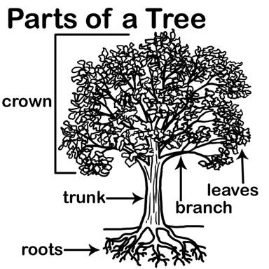 give the students a picture of a tree and have them label the parts or color the correct part of the tree as you list them